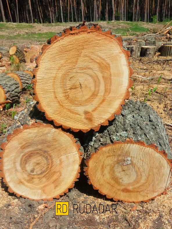 дрова Тольятти