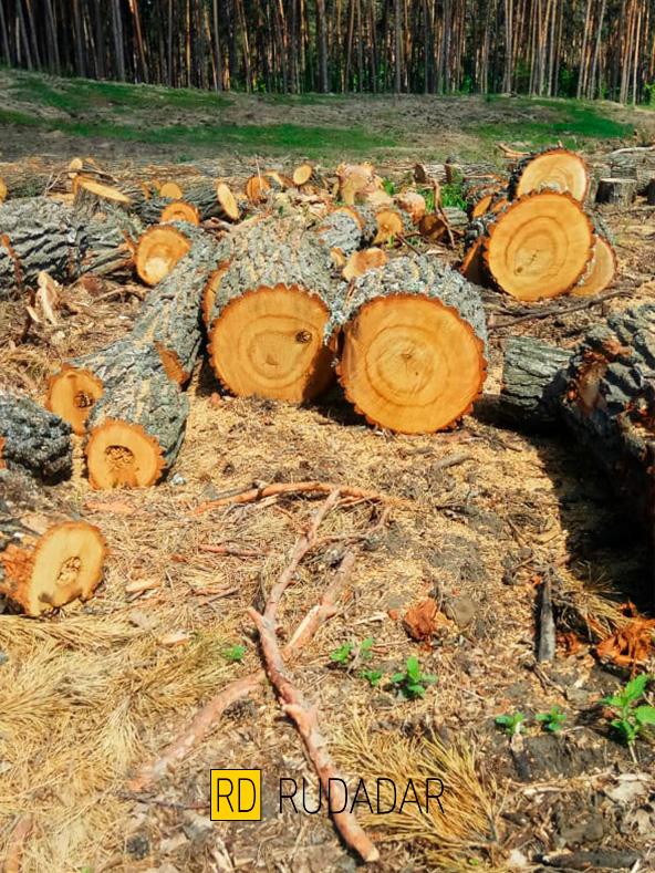 купить дрова в Тольятти
